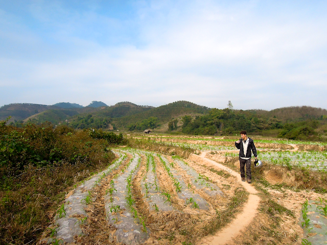 Rizière dans les environs de Luang Namtha